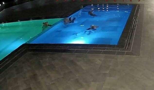 Медведи забрались в болгарский спа-салон, чтобы искупаться в бассейне
