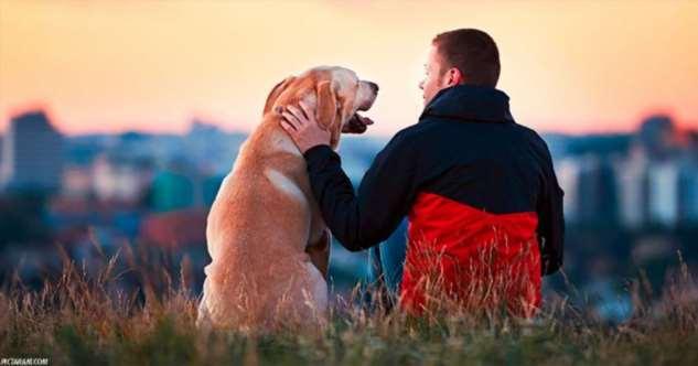 Потерять собаку может быть тяжелее, чем потерять друга. Исследование Интересное
