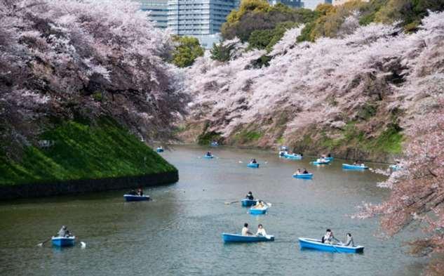 Японская весна, которую должен увидеть каждый хоть раз в жизни Интересное