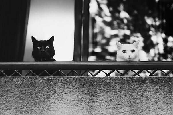 Инь и ян: черные и белые котики, которые выглядят так идеально, что кажутся одним целым (17 фото) Некоторые, замечательных, одного, части, будто, идеально, настолько, выглядят, вместе, могут, друга, кажется, которые, котиков, белых, черных, подборку, верят, представляем, Поэтому