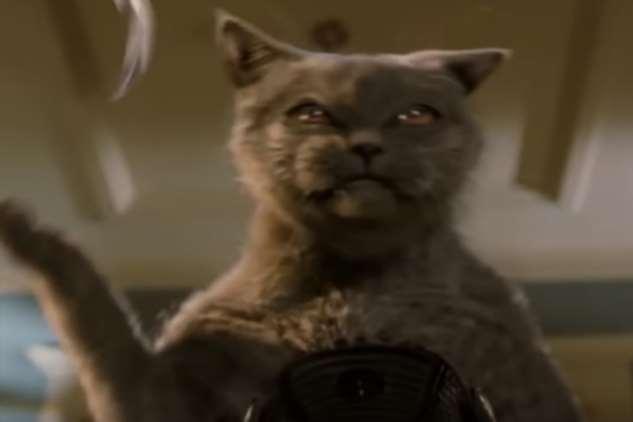Опасные и непредсказуемые породы кошек Интересное
