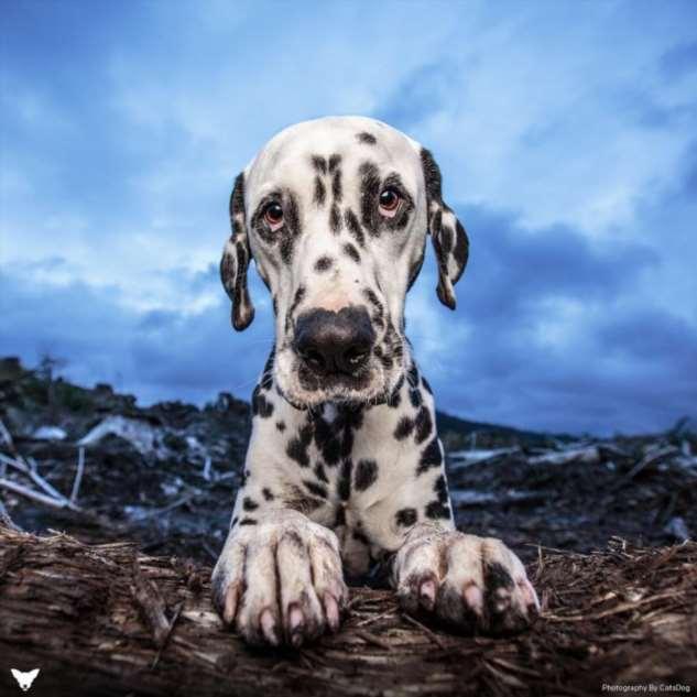 Красочные портреты позитивных собак Интересное