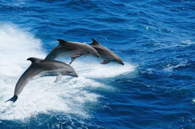Чёрное море: дельфинов всё меньше, зато мусор начинает сбиваться в острова