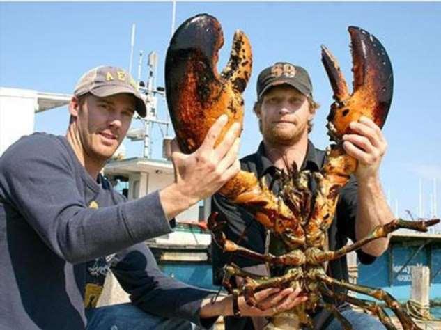 Факты и суеверия, связанные с морепродуктами: 8 любопытных советов количество, только, устриц, когда, морепродукты, можно, которые, палочки, здоровья, большое, более, осьминоги, стало, очень, морепродуктов, крабовые, всего, приготовления, одной, кулинарии