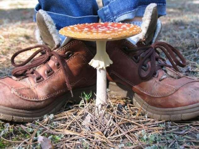 Незнакомые и ядовитые грибы: почему их нельзя уничтожать?