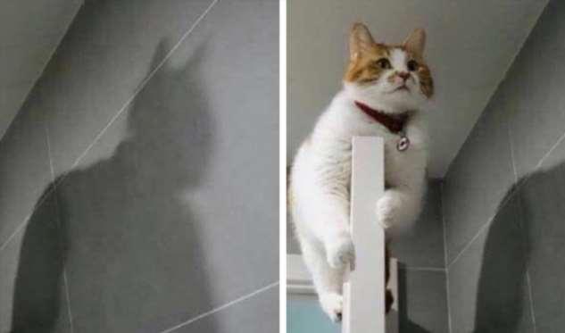 15+ фото котиков для экстренного поднятия настроения (Сохраняйте себе, чтобы не потерять)