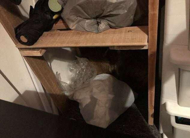 Хитрая лиса спряталась в женском гардеробе  Интересное