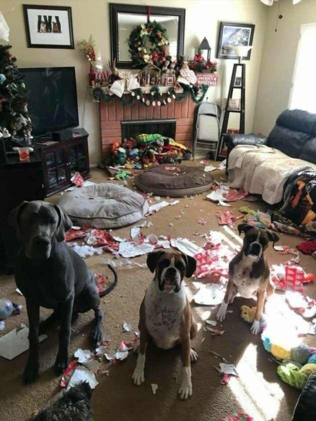 20 веселых рождественских провалов и неудач  Интересное
