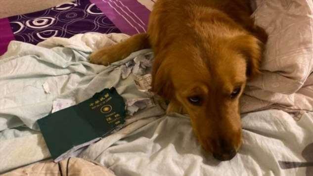 Собака порвала паспорт женщины и тем самым спасла от поездки в Ухань Интересное