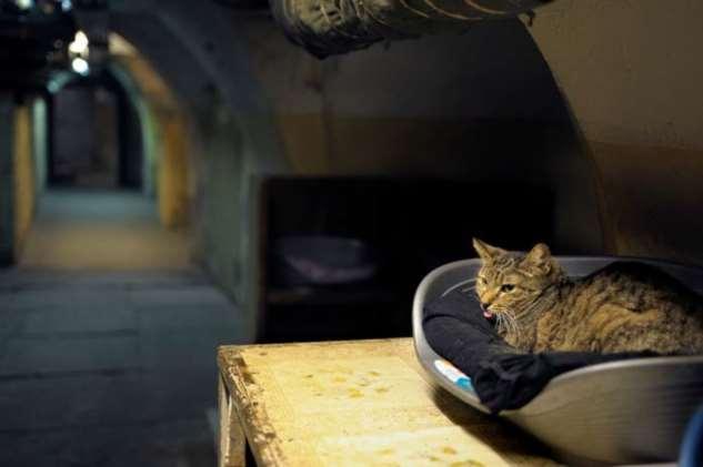 Музеи мира, в которых есть сотрудники-коты Интересное