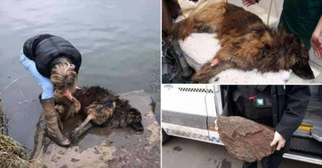 Женщина прыгнула в реку, чтобы спасти тонущую собаку