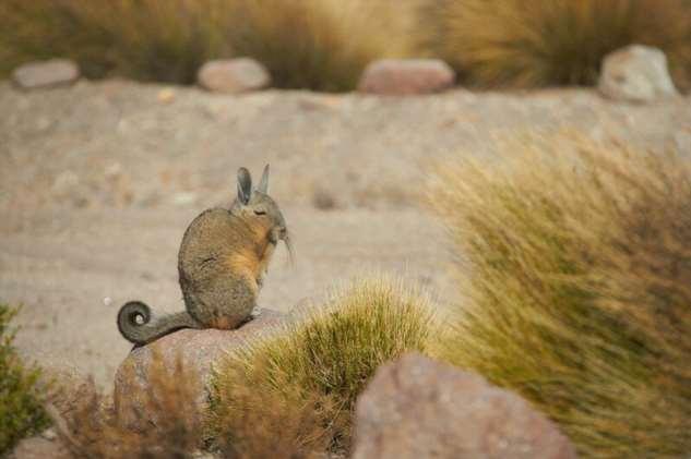 Животные, которых природа будто бы спроектировала в спешке  Интересное