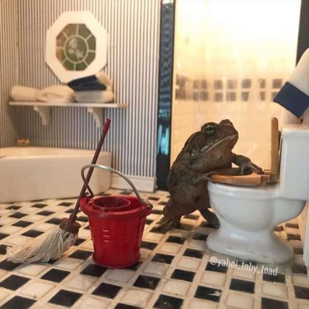 Женщина фотографирует свою жабу и людям нравится Интересное
