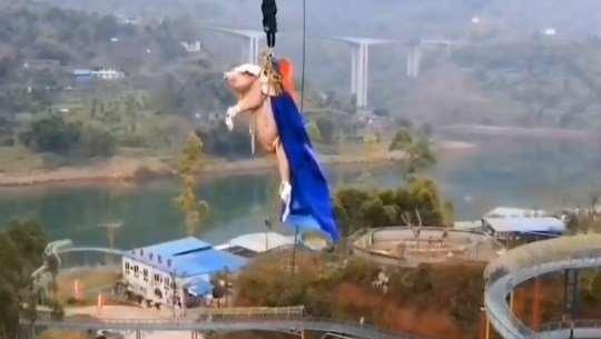 В Китае свинью заставили прыгать с парашютом с высоты  68 метров Китае, назвали, пользователей, после, защите, общественности, высоты, животным, Тематический, сетей, сообщают, конечном, итоге, отправили, бойню, развлечения, пишет, «Прямая, жестокость, видео