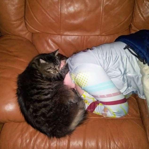 20+ человек, которые завели кота и теперь мечтают хотя бы о минуте покоя Интересное
