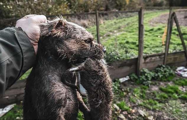 Фермеры истребили грызунов при помощи собак  Интересное