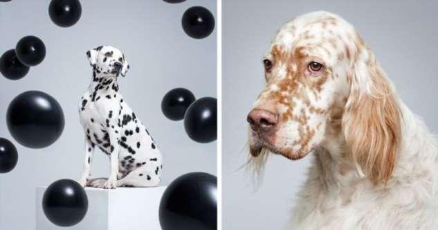 Удивительные портреты собак от Александра Хохлова