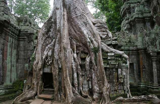 Камбоджийский храм Та Пром можно, храмов, блоки, деревья, Ангкор, стенами, храма, вековые, несколько, когда, более, храмы, очень, башнями, дерево, камни, гигантскими, массивным, после, наблюдать