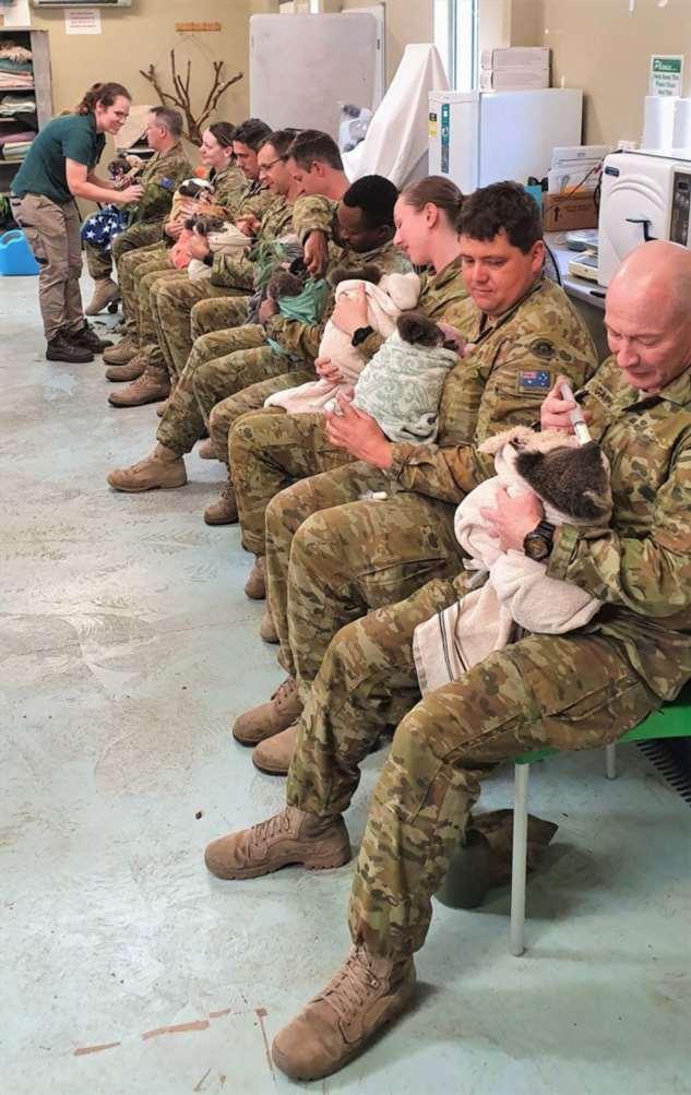 Солдаты австралийской армии ухаживают за спасенными коалами Интересное
