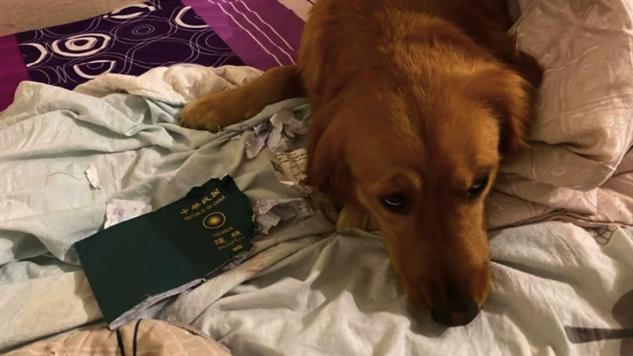 Собака спасла хозяйку от заражения коронавирусом, уничтожив ее паспорт Интересное