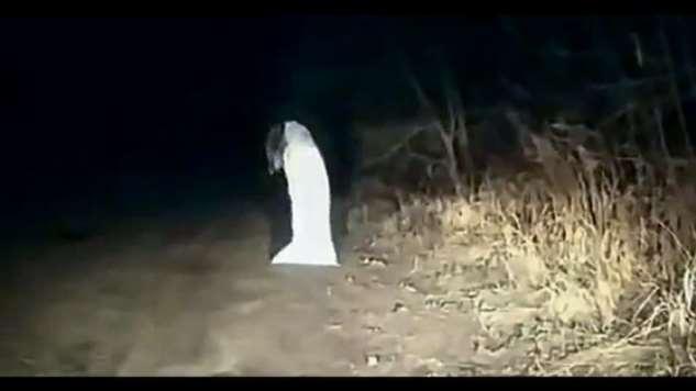 Рассказ девушки, которая повстречала рептилоида  Интересное