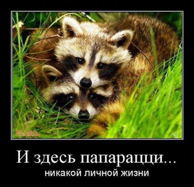 Демотиваторы. Подборка №chert-poberi-09480415022020