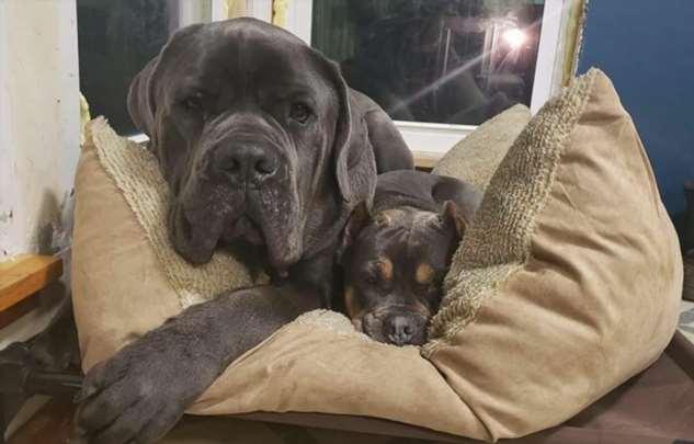 Этот очаровательный щенок показывает свою любовь к сестре, сидя на ней сверху  Интересное