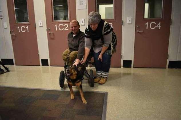 Парализованный пес очень ждал человека, который его полюбит — и дождался чуда  Интересное