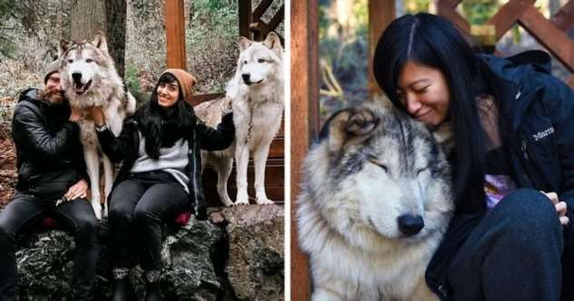 Заповедник с  дружелюбными волками туризм и отдых