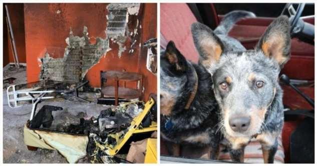 Любопытный пес устроил пожар в жилище хозяина