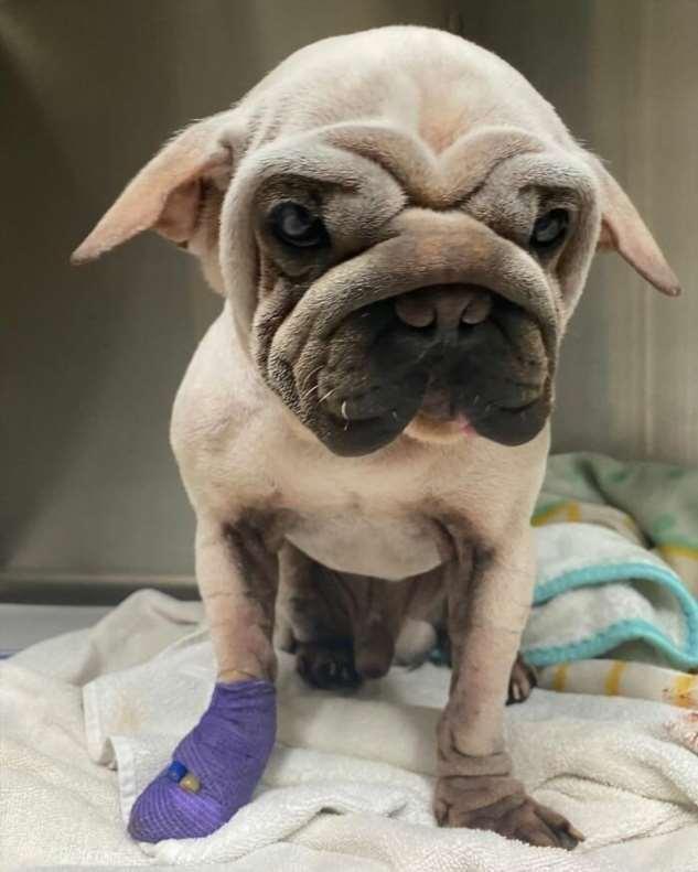 Спасенный от смерти щенок выглядит как малыш Йода  Интересное