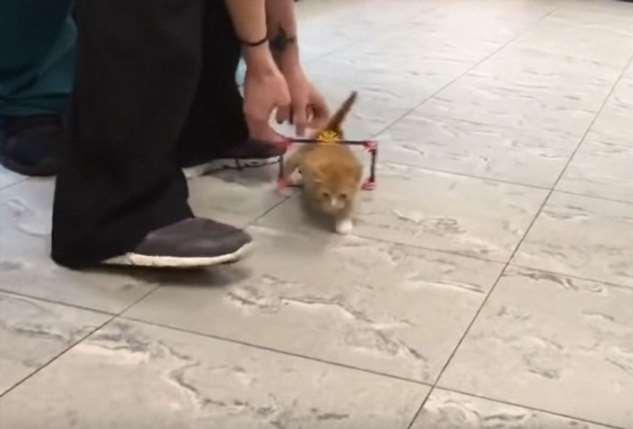 Спасенный котик с парализованными ногами подрос Интересное