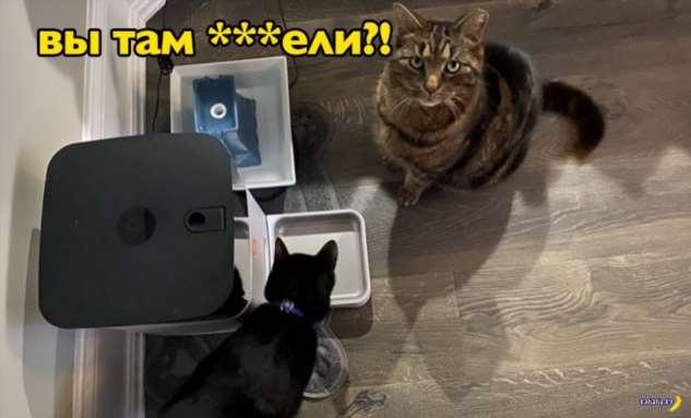 Сбой системы SmartFeeder оставил котиков голодными Интересное