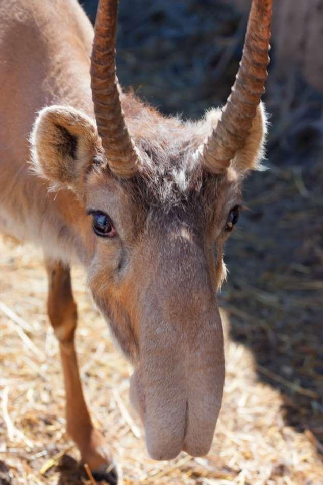 17 животных, которыми природа хотела всех ошеломить и немного переборщила