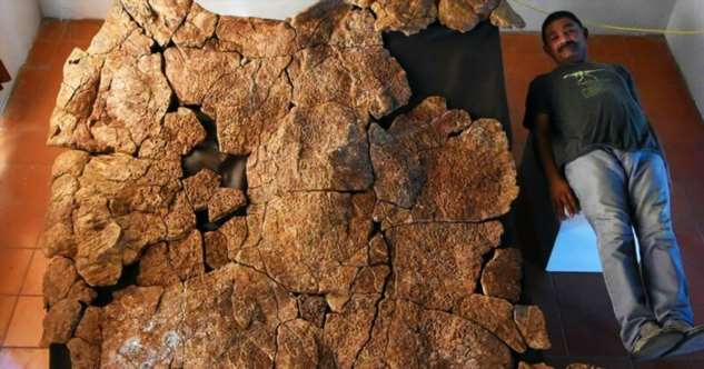 В Южной Америке найдены останки панциря древней черепахи