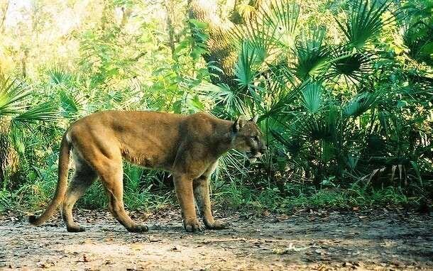 Животные, которых почти невозможно увидеть в дикой природе Интересное