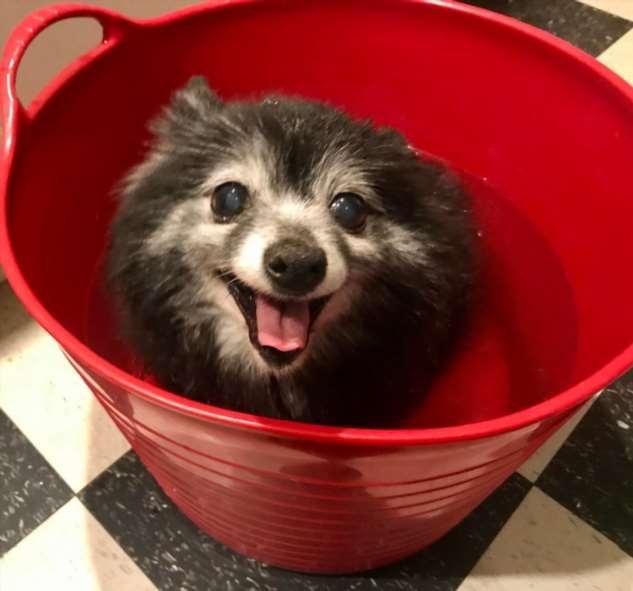 20 человек, которые завели собаку и теперь разгребают последствия