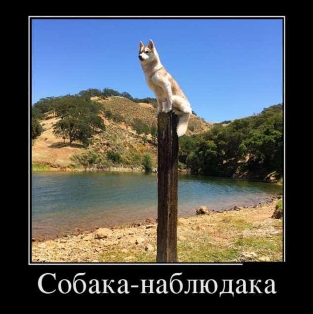 Демотиваторы. Подборка №59440418022020 юмор,демотиваторы,прикольные картинки,смешные фото
