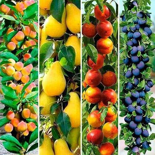 Колоновидные сады будущего: урожай из ниоткуда  Интересное