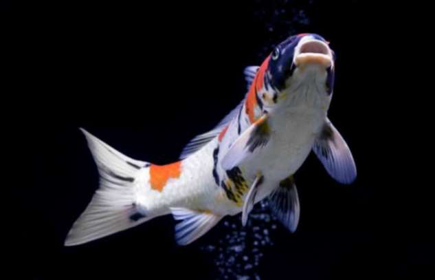 Как спят рыбы и почему городское освещение может их убить?  Интересное