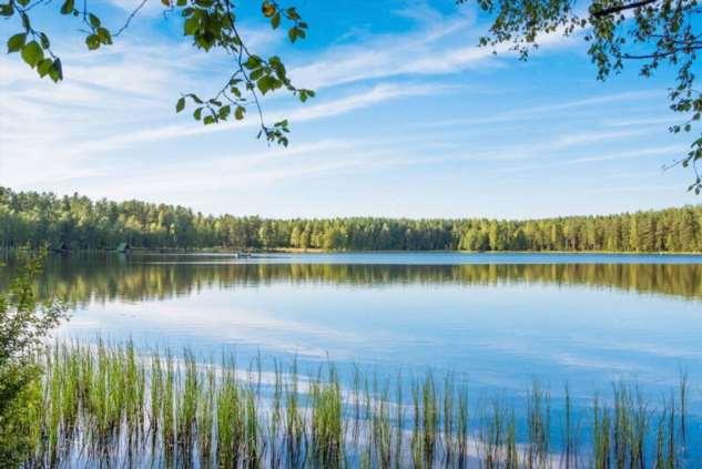 Лесные озёра  Интересное