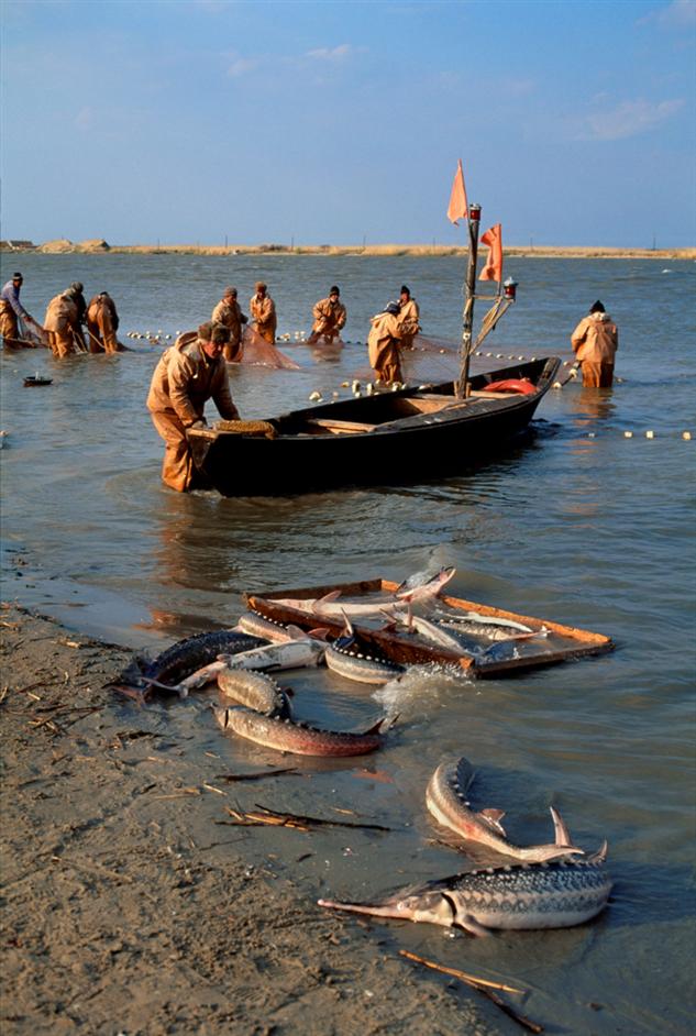 Как это было. 1997 год. На рыбных промыслах Каспия  Интересное