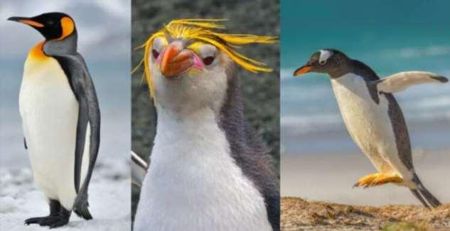 Умеют ли пингвины общаться под водой? Интересное