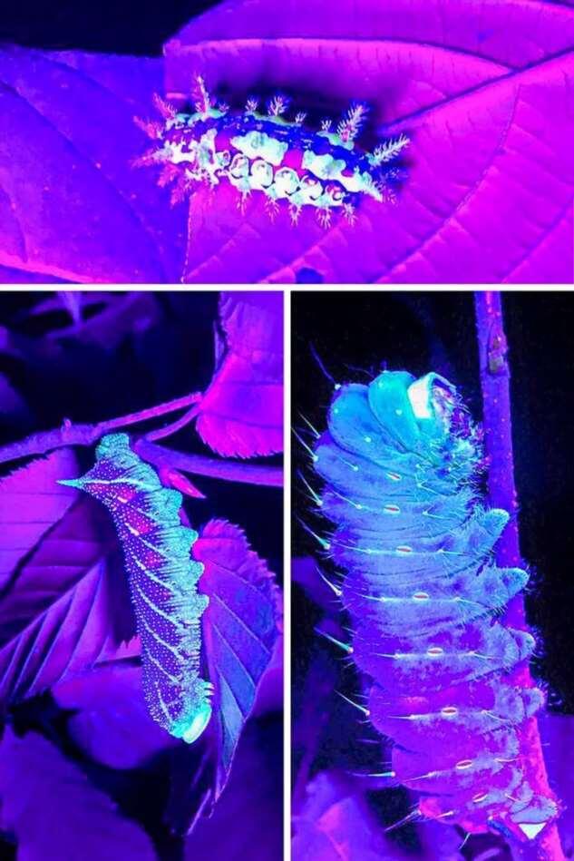 Какие секреты поверхностей способен раскрыть ультрафиолетовый свет?  Интересное