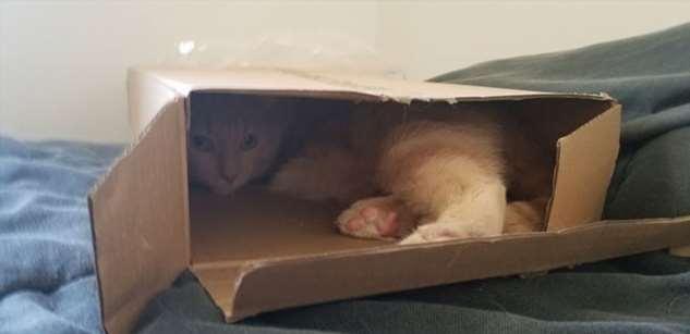 Любимые, но запретные кошачьи места  Интересное