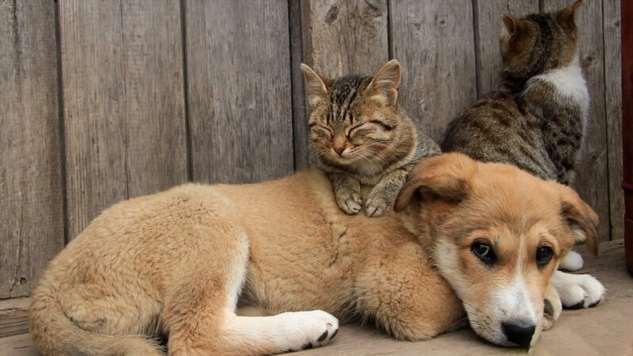 Кто отвечает за бездомных животных: что делать, куда обращаться?  Интересное
