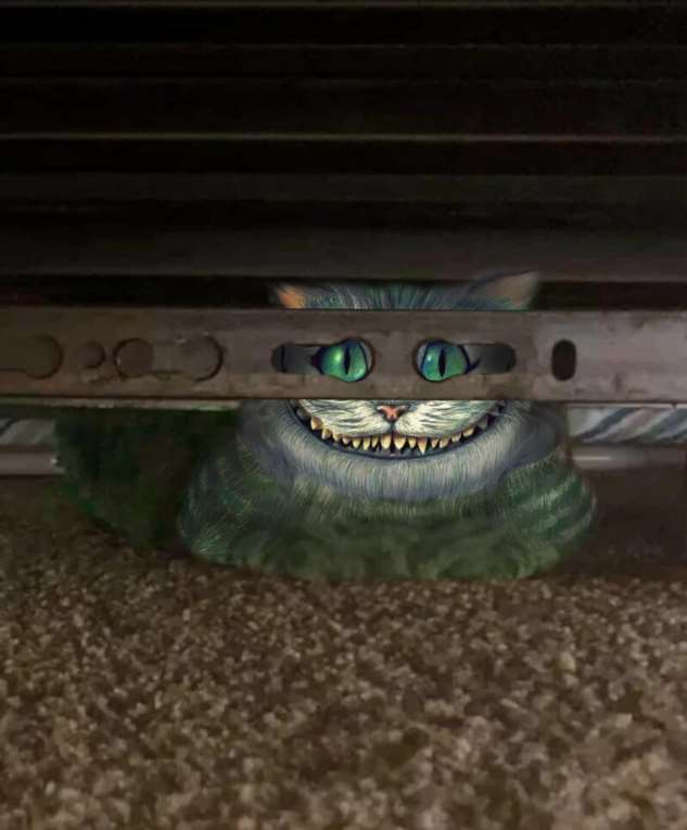 Фотожабы: кот в маске  Интересное