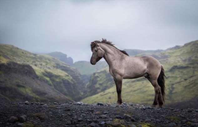 Лошади на фоне исландских пейзажей Интересное