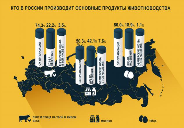 Кто в России производит основные продукты животноводства?  Интересное