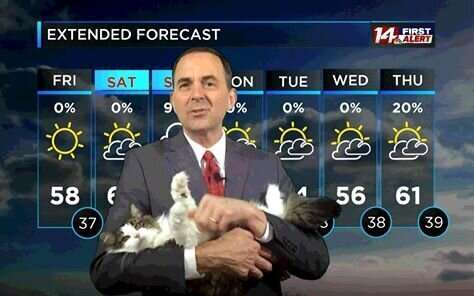 Синоптик ведёт прогноз погоды со своей кошкой Бетти  Интересное